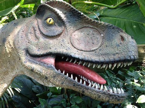 Fotos gratis : selva, depredador, fauna, cabeza, dientes ...