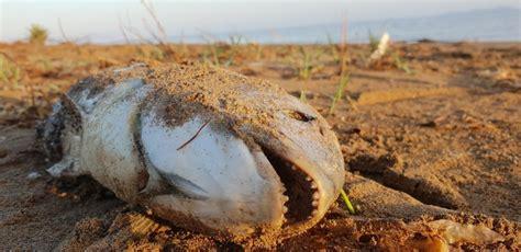Fotos: La Dana también devastó el Mar Menor   Sociedad ...