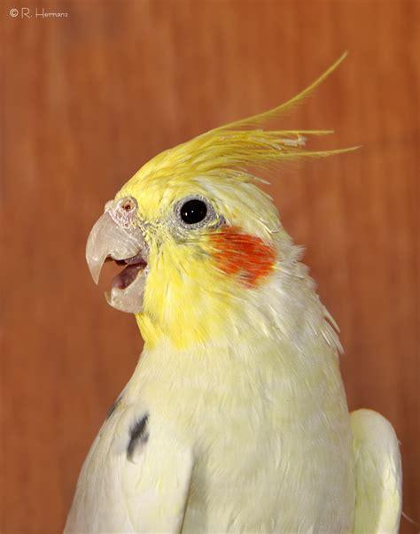 fotosricardo h: MASCOTAS AVES   Bird pets