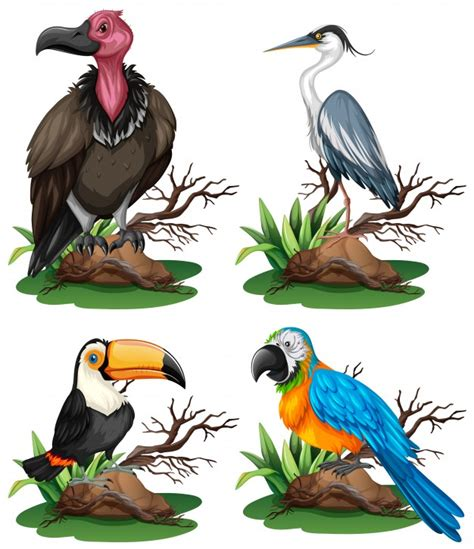 Four different kinds of wild birds illustration Vector ...