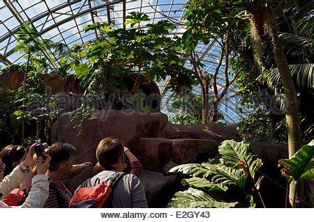 France Paris Paris Zoological Park  Zoo de Vincennes ...