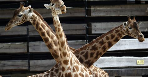 France   Paris zoo reopens   Pictures   CBS News