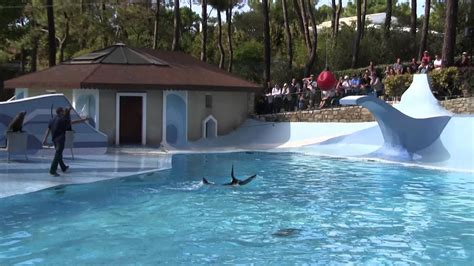 France Zoo de la Palmyre Otaries Show   YouTube