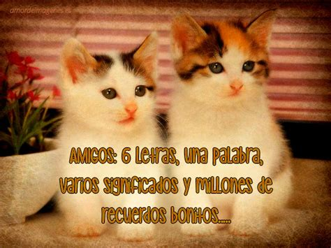 Frases de amistad con imágenes de gatos