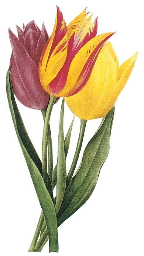 Free Clip Art Spring Flowers   ClipArt Best