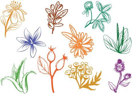 Free Cosmetics Herbs Vectors   Download Free Vectors ...
