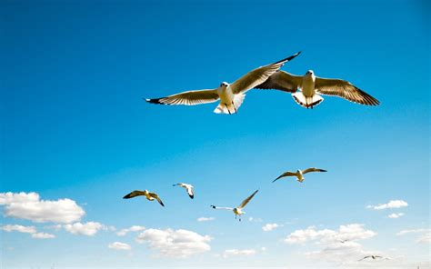 Free Flying Birds, Download Free Clip Art, Free Clip Art ...