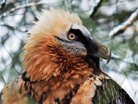 Free Image on Pixabay   Harpie, Raptor, Bird Of Prey, Bird ...