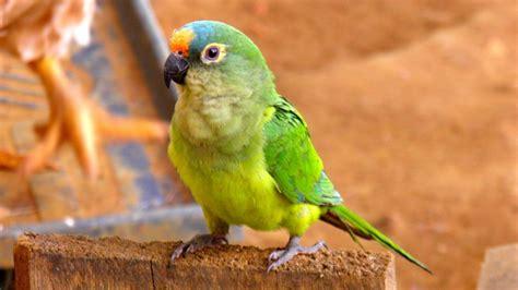 Free Images : nature, animal, wildlife, environment, zoo ...