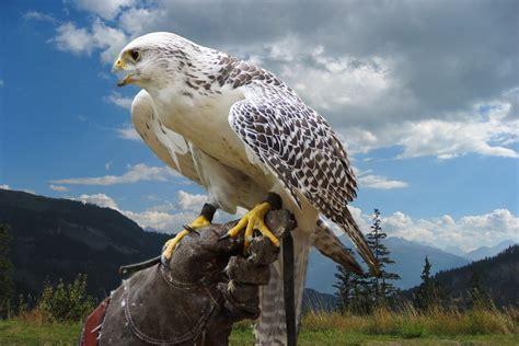 Free Images : nature, fly, wildlife, portrait, beak, eagle ...