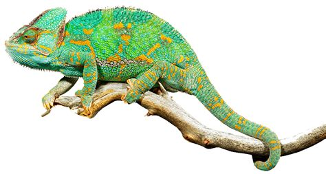 Free Images Of Reptiles, Download Free Clip Art, Free Clip ...