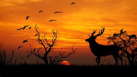 Free Images : silhouette, sunrise, sunset, prairie ...