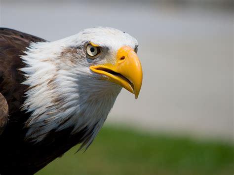 Free Images : wing, peak, wildlife, beak, fauna, bird of ...