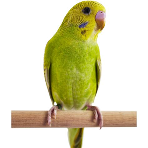 Free photo: Birds   Bird, Dark, Fly   Free Download   Jooinn