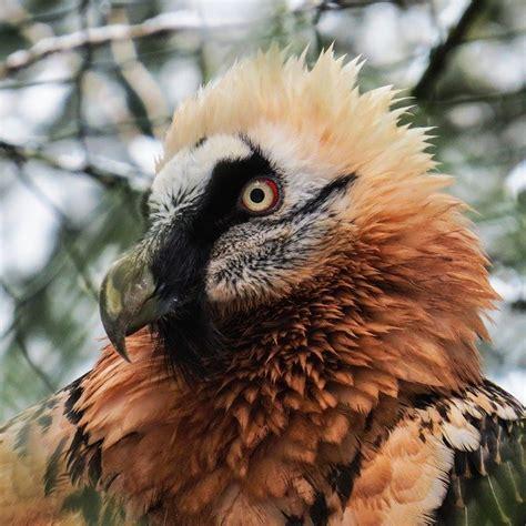 Free photo: Harpie, Bird, Raptor, Bird Of Prey   Free ...