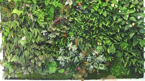 Free photo: Plant Wall   Brown, Bush, Garden   Free ...