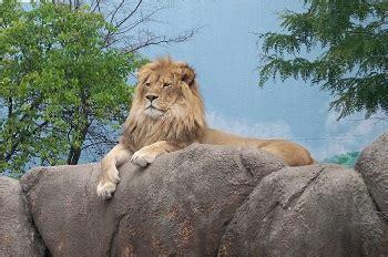 French Zoo Animals | Study.com