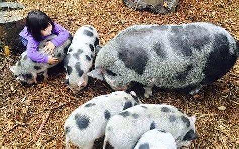 Friendly Farm Animals and Springtime Fun   Kid 101