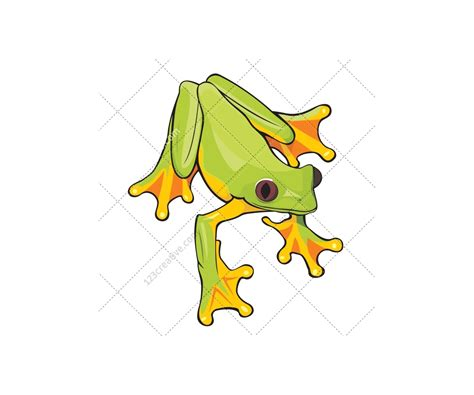 Frog vector pack   various frog illustrations for ...