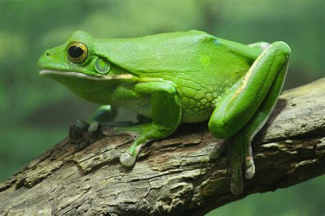 Frog Wallpapers HD Download