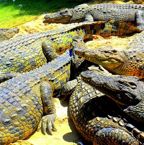 Fuengirola Zoo 2011   Zoo, Photo, Andalusia