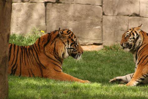 Fuengirola Zoo | Day trip to the zoo in Fuengirola, Malaga ...