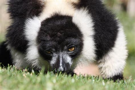 Fuengirola Zoo   Flickr