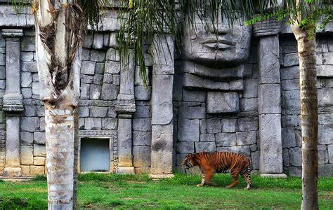 Fuengirola Zoo   Tiger in Fuengirola Zoo   conteurd   Flickr