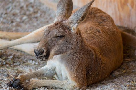 Fun Facts About Three Ararat Ridge Zoo Animals   Ark Encounter