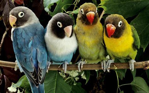 Fun zone: Latest Birds HD Wallpapers