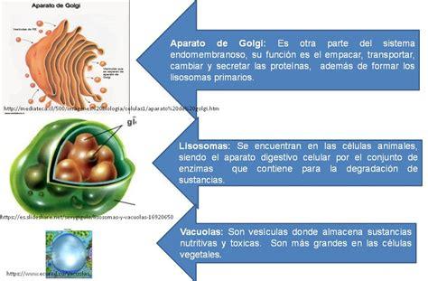 Función y estructuras de las células . La Pared Celular
