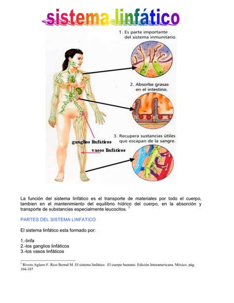 Funciones Del Sistema Linfático La Guía De Biología