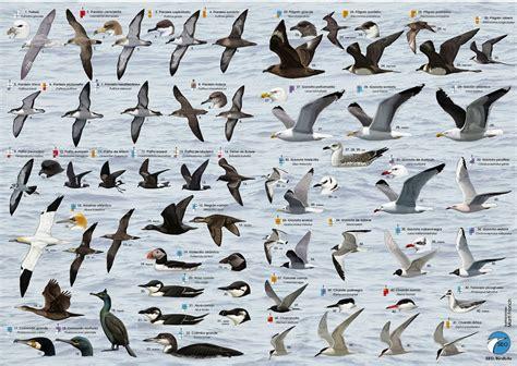 Fundación LURGAIA Fundazioa: Disfrutando de los cetáceos y ...