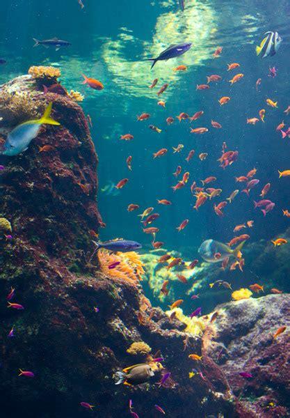 fundo do mar on Tumblr