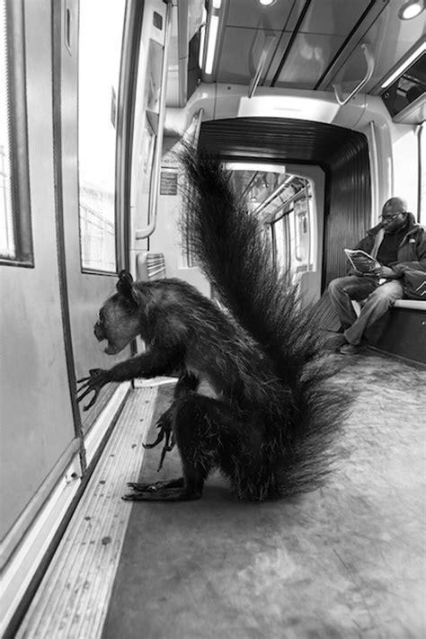 Funny!!! Animals Of Savannah In Paris Metro  Photo Gallery