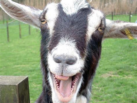 Funny Animals Photos 2012 | Funny World
