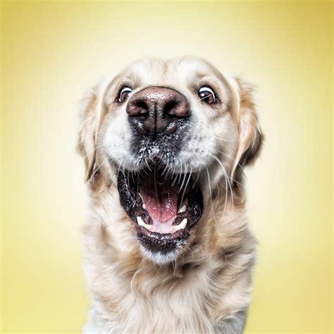 Funny  Dog  Faces – Erblicken.com