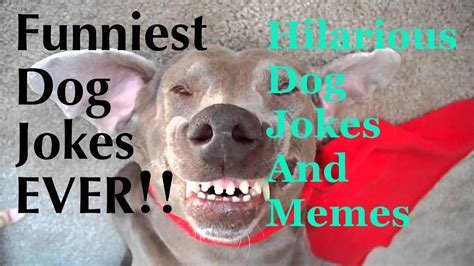 Funny Dog Jokes For Kids   Funny Jokes About Dogs ...