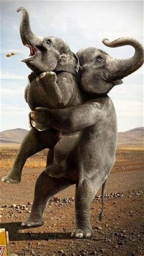 Funny Funny Pictures: Funny Elephant in Circus