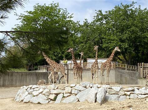 Galería Interes Madrid   El Zoo Aquarium de Madrid reabre ...