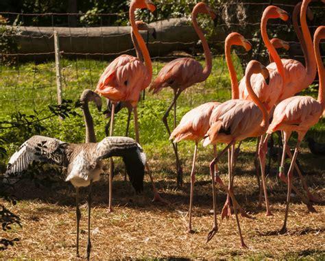 Galería Madridiario   Los animales del Zoo de Madrid ...