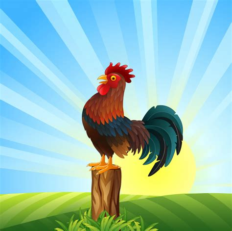 Gallo de dibujos animados cantando al amanecer | Descargar ...