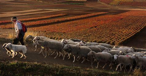 Ganadería extensiva en La Rioja: necesidades y ...