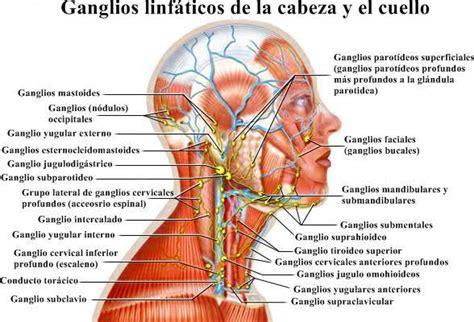 Gánglios linfáticos inflamados en el cuello: causas ...