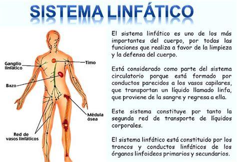 Ganglios linfáticos: ¿Qué son? Anatomía, función ...