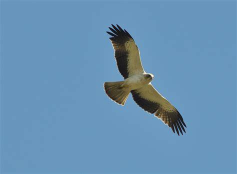 Gary Waddington s Blog: Southern Spain; Raptors and ...