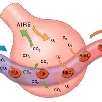 Gases intestinales y estomacales: Causas, síntomas y ...