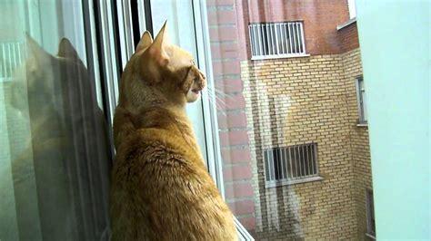 Gato hablando con los pájaros   YouTube