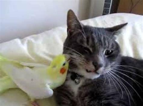 Gato jugando con un pajaro   Mascotas