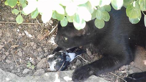 Gato se come un pájaro   YouTube